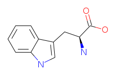 Structure of L-Tryptophan